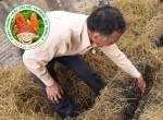 Đào tạo kỹ thuật trồng nấm rơm trong nhà
