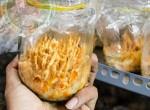 Quy trình chuyển giao công nghệ sản xuất đông trùng hạ thảo