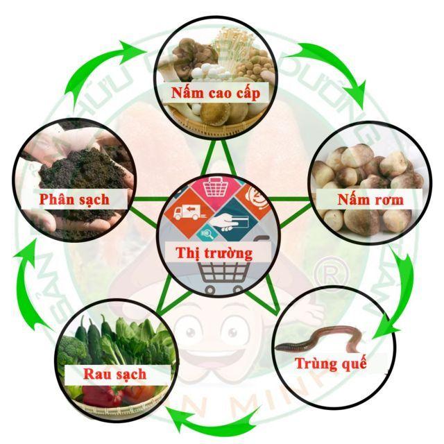 Quy trình Organic