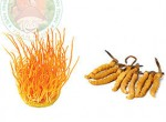 Hướng dẫn cách sử dụng đông trùng hạ thảo