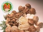 Chuyên phân phối nấm rơm tại Đồng Nai