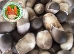 Dạy cách trồng nấm rơm năng xuất cao