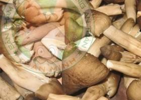 Cung cấp nấm thành phẩm các loại như: Nấm mối đen, Đông trùng hạ thảo, Nấm linh chi, Nấm rơm