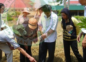 Đào tạo kỹ thuật trồng và chăm sóc bảo quản các loại nấm